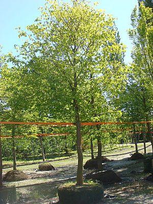 Udvalgte sommertræer depottræer 24 juli 2009