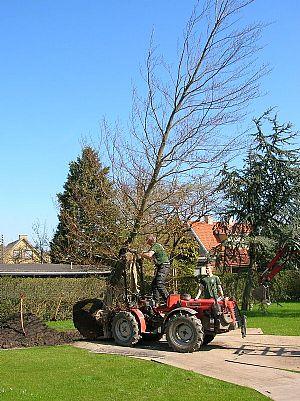 træer, store træer, træ, træplantning, plantning af træer, havearkitekt,ARS,haveredskaber,BELU