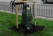 Træer, Store træer, planteskole, plantning af træer, træplantning,trækonsulent,havearkitekt,stangsak