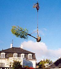 salg af træer og buske