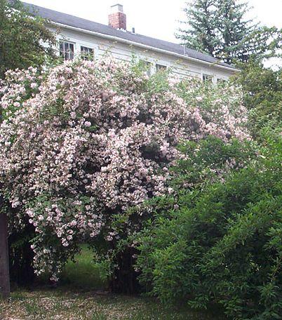 stor busk